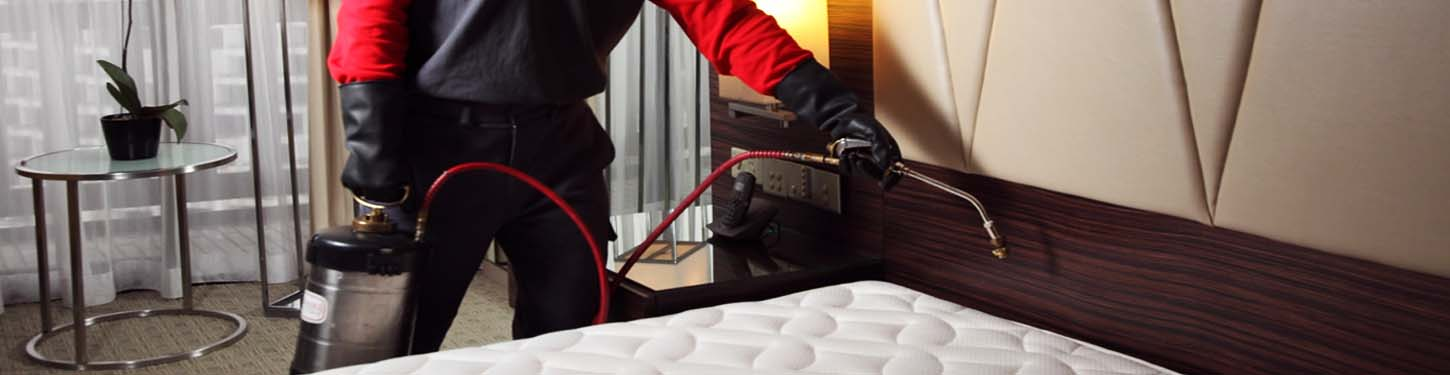 bed bugs extermination