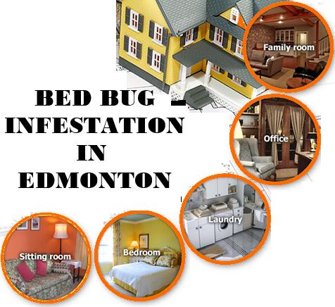 bed_bugs_edmonton