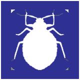 Bedbug Exterminator