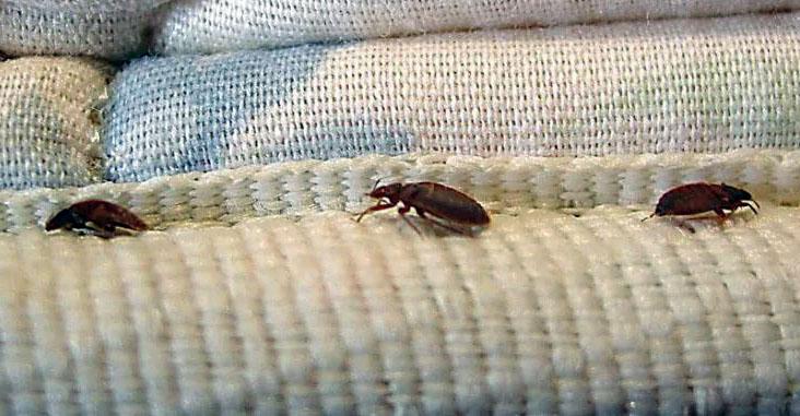 Pests Extermination Edmonton