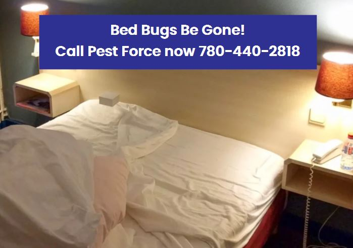 Pests Extermination Edmonton